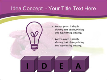 Wet Purple Tulip PowerPoint Templates - Slide 80