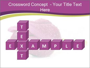 Wet Purple Tulip PowerPoint Templates - Slide 82