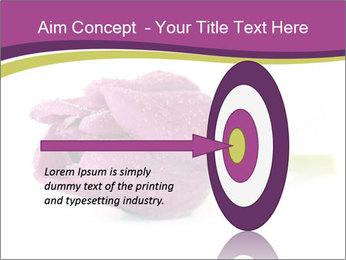 Wet Purple Tulip PowerPoint Templates - Slide 83