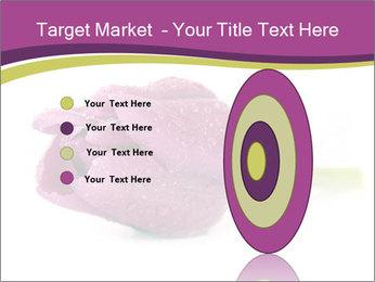 Wet Purple Tulip PowerPoint Templates - Slide 84