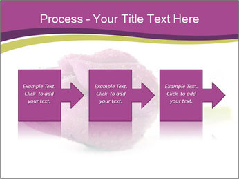 Wet Purple Tulip PowerPoint Templates - Slide 88