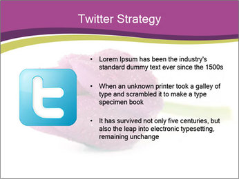 Wet Purple Tulip PowerPoint Templates - Slide 9
