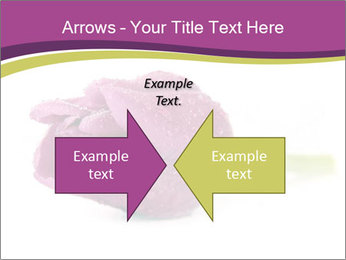 Wet Purple Tulip PowerPoint Templates - Slide 90