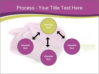 Wet Purple Tulip PowerPoint Templates - Slide 91