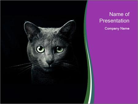 Portrait of Grey Cat PowerPoint Templates