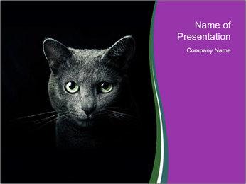 Portrait of Grey Cat PowerPoint Templates - Slide 1