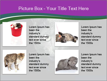 Portrait of Grey Cat PowerPoint Templates - Slide 14