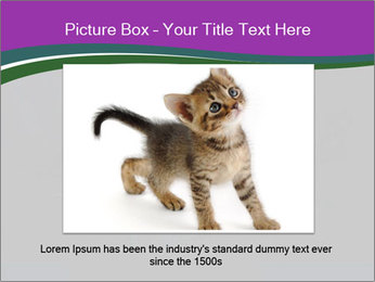 Portrait of Grey Cat PowerPoint Templates - Slide 16