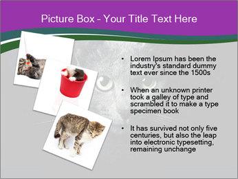 Portrait of Grey Cat PowerPoint Templates - Slide 17