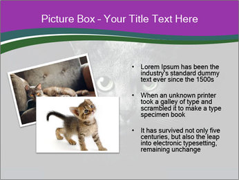 Portrait of Grey Cat PowerPoint Templates - Slide 20