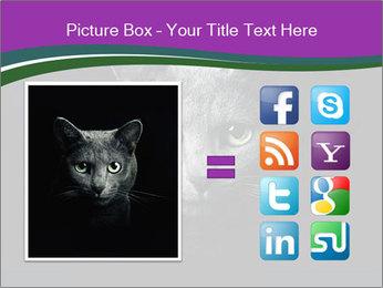 Portrait of Grey Cat PowerPoint Templates - Slide 21
