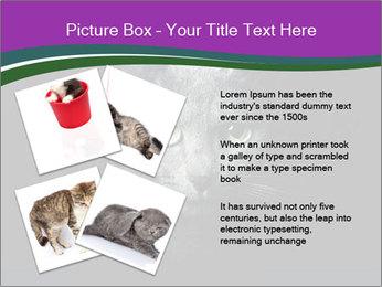 Portrait of Grey Cat PowerPoint Templates - Slide 23