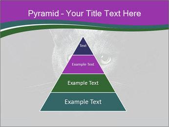 Portrait of Grey Cat PowerPoint Templates - Slide 30