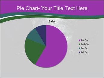 Portrait of Grey Cat PowerPoint Templates - Slide 36