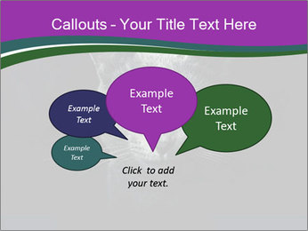 Portrait of Grey Cat PowerPoint Templates - Slide 73