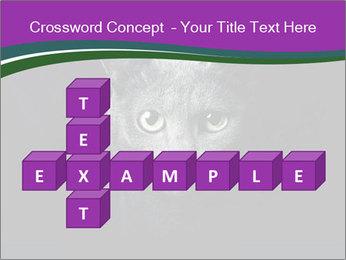 Portrait of Grey Cat PowerPoint Templates - Slide 82