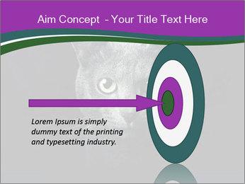 Portrait of Grey Cat PowerPoint Templates - Slide 83