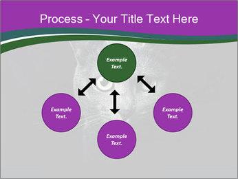 Portrait of Grey Cat PowerPoint Templates - Slide 91