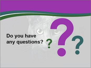 Portrait of Grey Cat PowerPoint Templates - Slide 96