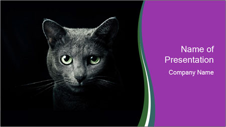 Portrait of Grey Cat PowerPoint Template