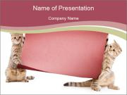 Cats Holding Pink Board PowerPoint Templates