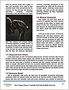 0000063551 Word Templates - Page 4