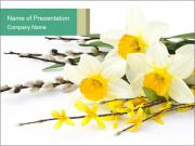 Cute Narcissus Flowers PowerPoint Templates
