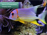 Multicolored Fish PowerPoint Templates