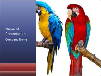 Big Ara Parrots PowerPoint Template - Slide 1