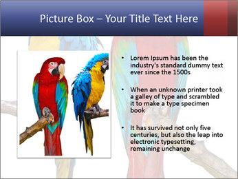 Big Ara Parrots PowerPoint Template - Slide 13