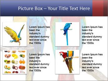 Big Ara Parrots PowerPoint Template - Slide 14