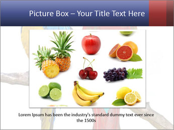 Big Ara Parrots PowerPoint Template - Slide 15