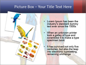 Big Ara Parrots PowerPoint Template - Slide 17