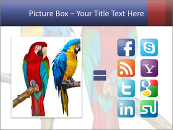 Big Ara Parrots PowerPoint Template - Slide 21