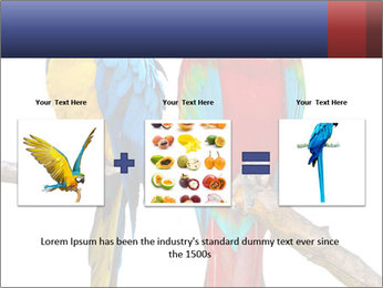Big Ara Parrots PowerPoint Template - Slide 22