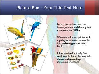 Big Ara Parrots PowerPoint Template - Slide 23
