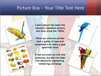 Big Ara Parrots PowerPoint Template - Slide 24