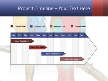 Big Ara Parrots PowerPoint Template - Slide 25