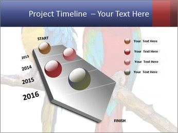 Big Ara Parrots PowerPoint Template - Slide 26