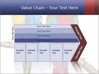Big Ara Parrots PowerPoint Template - Slide 27