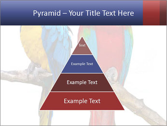 Big Ara Parrots PowerPoint Template - Slide 30