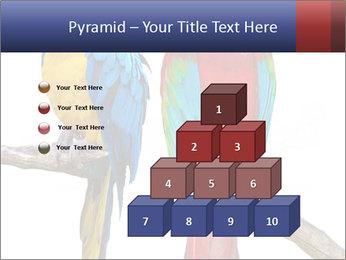 Big Ara Parrots PowerPoint Template - Slide 31