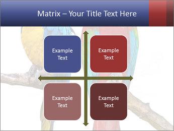 Big Ara Parrots PowerPoint Template - Slide 37