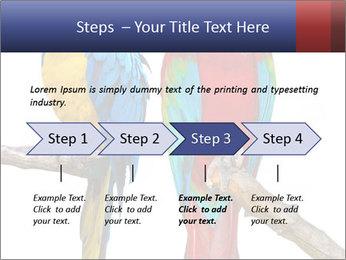 Big Ara Parrots PowerPoint Template - Slide 4