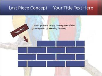 Big Ara Parrots PowerPoint Template - Slide 46
