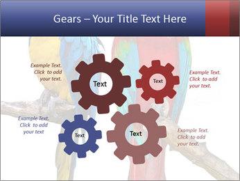 Big Ara Parrots PowerPoint Template - Slide 47