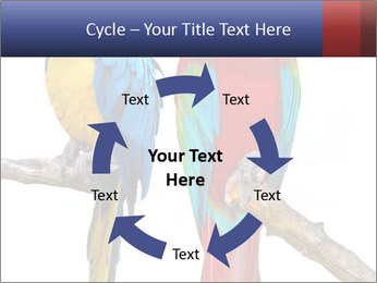 Big Ara Parrots PowerPoint Template - Slide 62