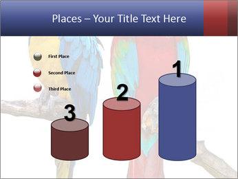 Big Ara Parrots PowerPoint Template - Slide 65