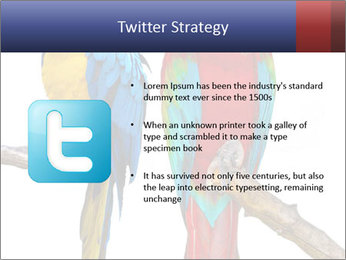 Big Ara Parrots PowerPoint Template - Slide 9