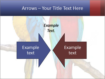 Big Ara Parrots PowerPoint Template - Slide 90